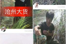 河北沧州火了