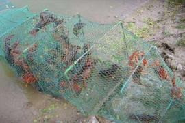 如何在野外捕捉小龙虾