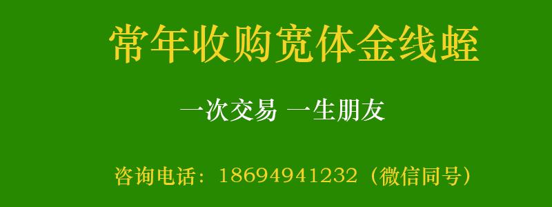 小姚工作室收购水蛭成交客户记录定期更新,感谢客户信任!-小姚工作室